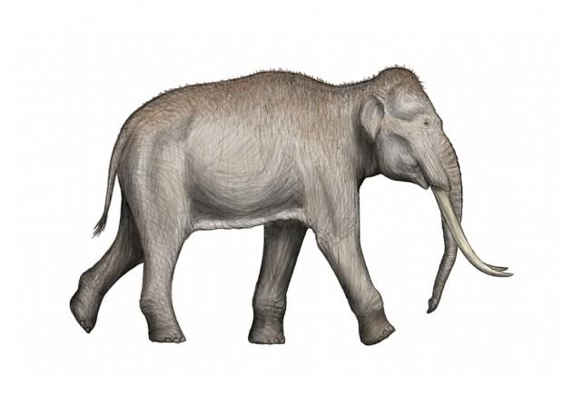 일직선상아 코끼리의 상상도. 일직선상아 코끼리는 10만 년 전에 멸종된 것으로 추정된다. - DFoidl 제공